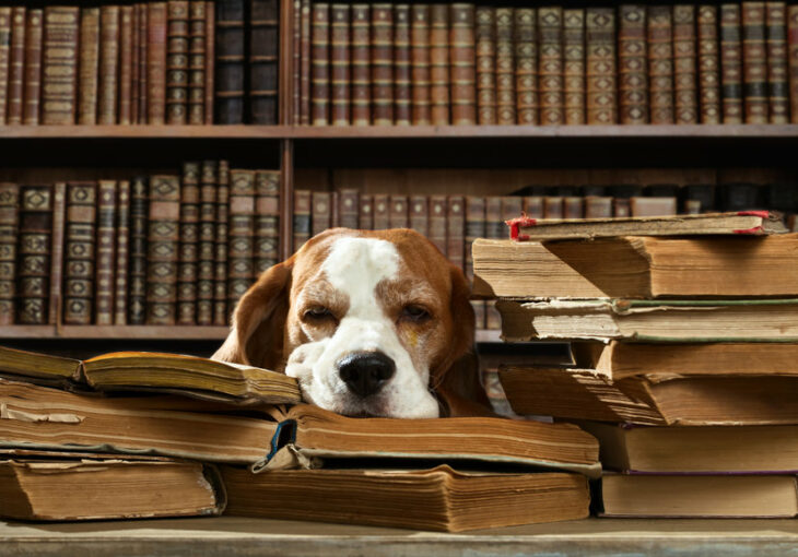 dog in library